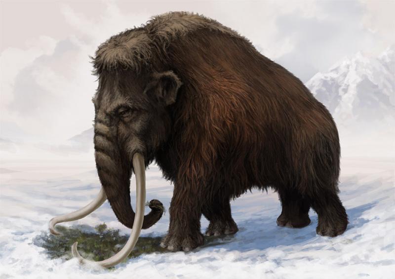 Mammouth en Amérique du Nord