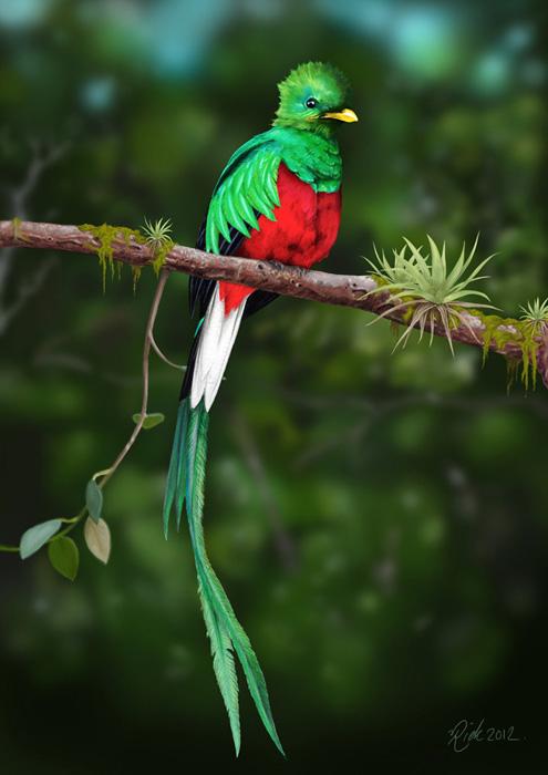 Oiseau de Quetzal, Mayas antiquité