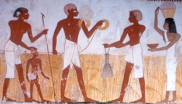 Agriculture période pré-dynastique