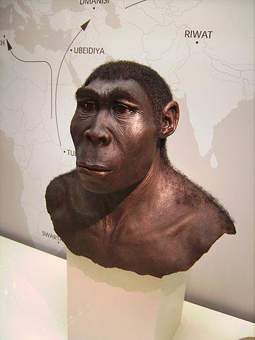 Homo erectus préhistoire