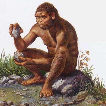 Homo habilis préhistoire