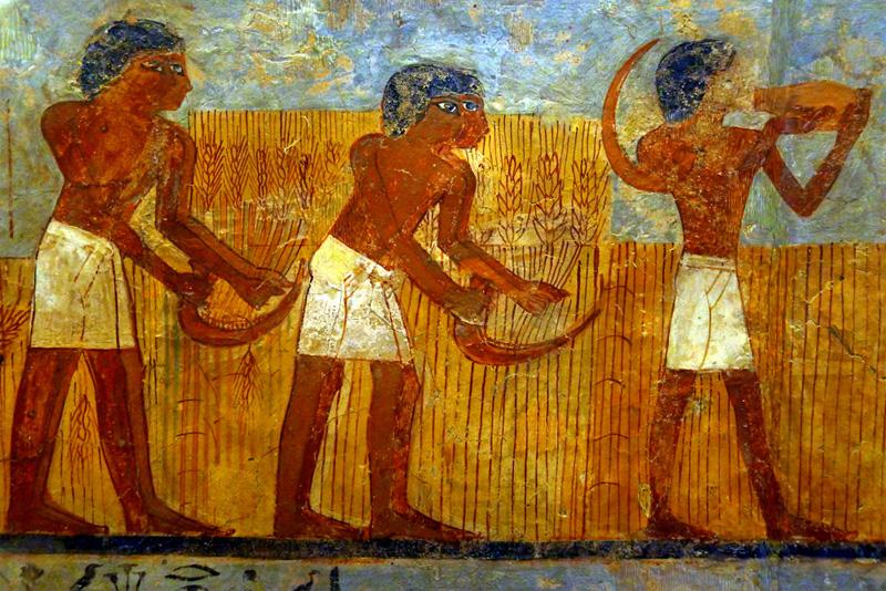 Agriculture Égypte période pré-dynastique