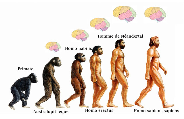 Evolution hominidés préhistoire