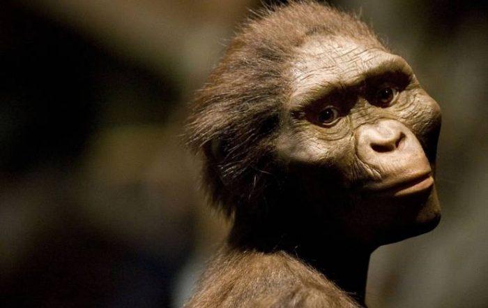 Australopitheque pendant la préhistoire