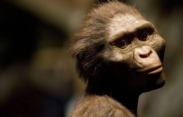 australopitheque-prehistoire